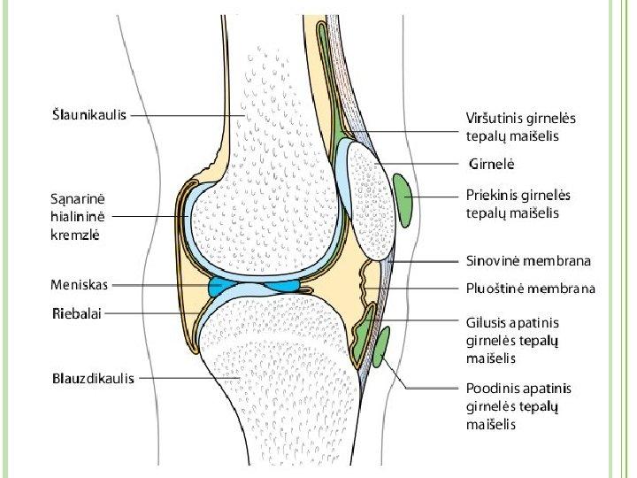 skausmas alkūnės ir plaštakos sąnario