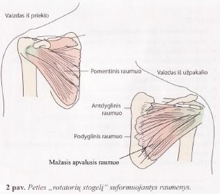 osteopata su artrozės peties sąnario