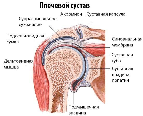 artrozė 1-ojo laipsnio gydymo