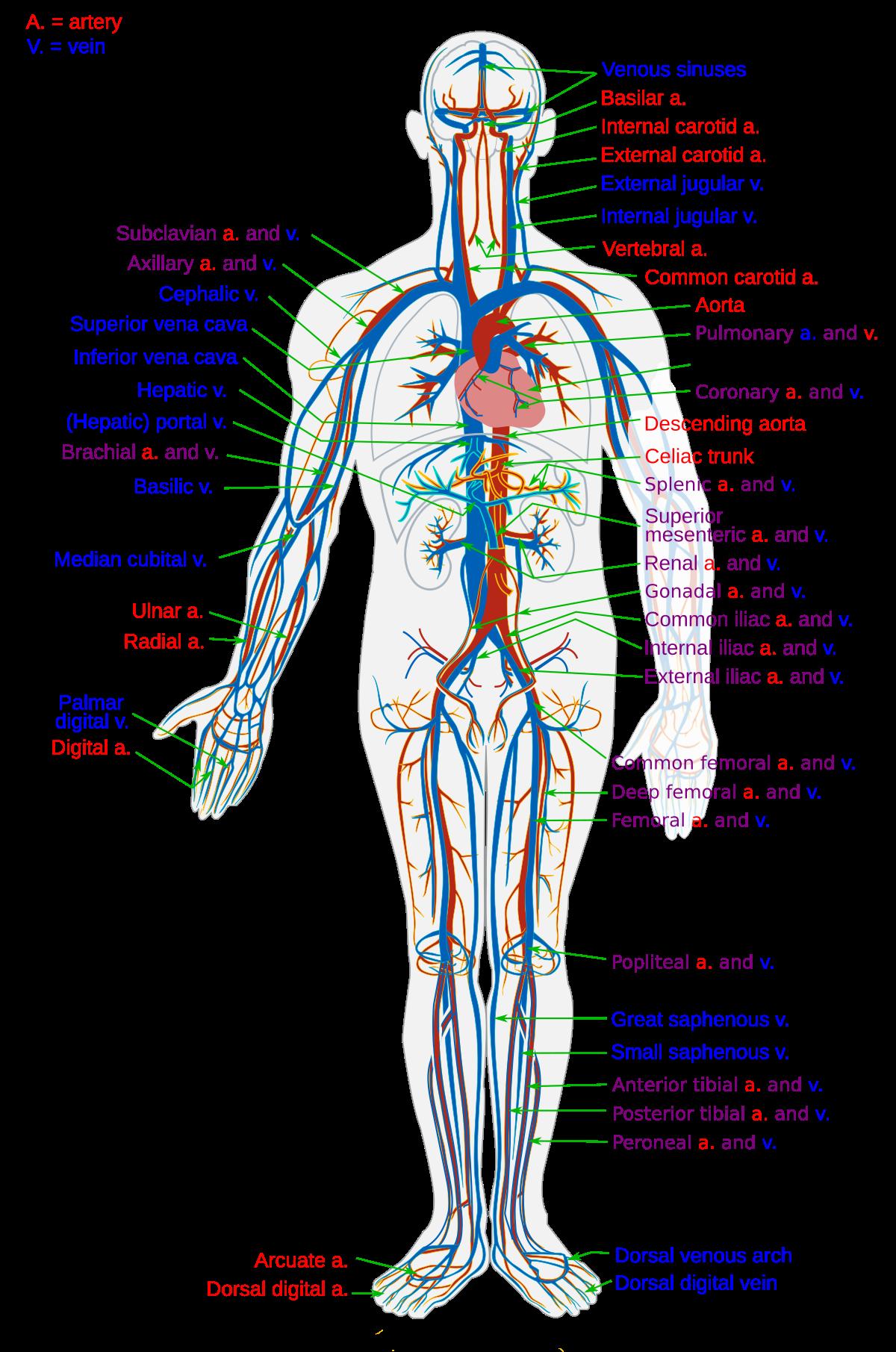 edema viduje sustava