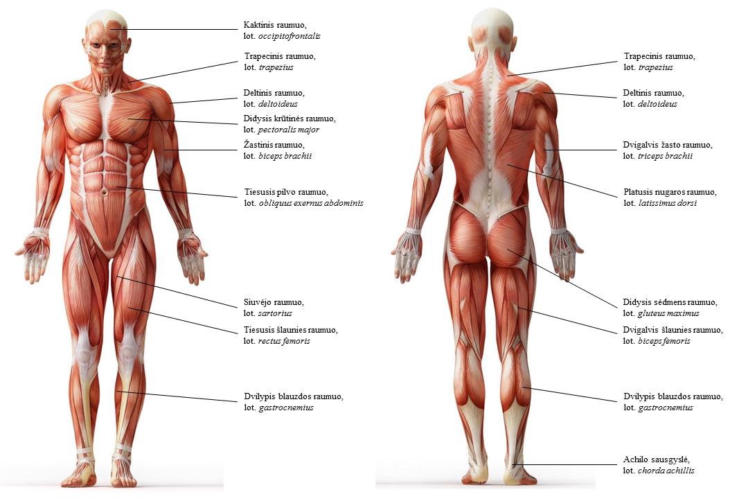 bold sąnariai ir raumenys viso kūno sąnarių skausmas po čiurnos kaulų lūžių