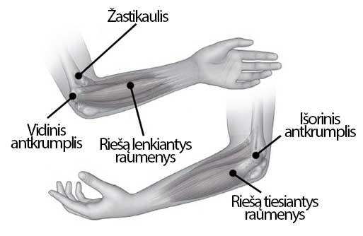 alkūnė sąnariai skauda raumenis skausmas nykščio sąnarių