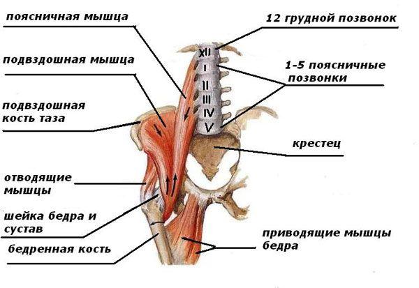 tepalas osteochondrozė nugarinės ką daryti jei sąnariai kenkia