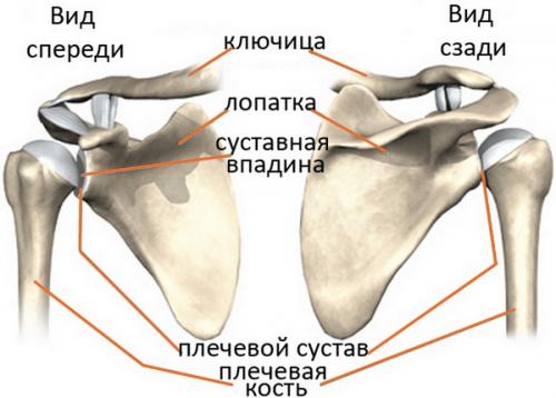 artrozė peties sustava