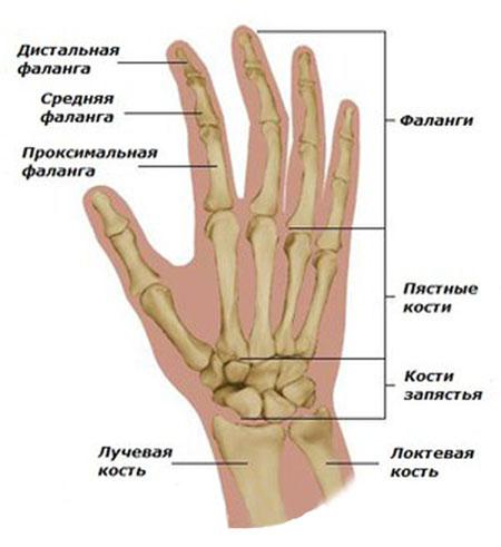 skausmas alkūnės sąnario artritas