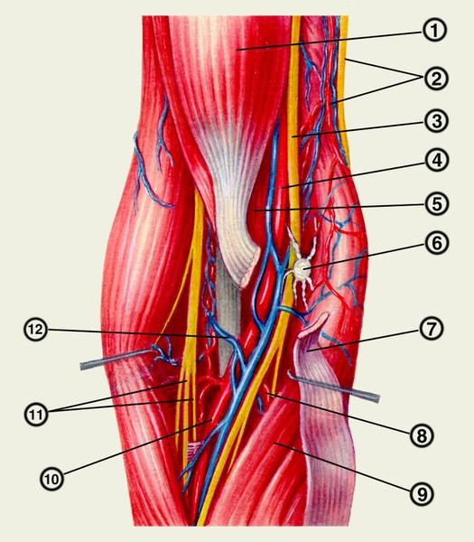 namų gydymo artrozės skausmas venų ir sąnarių priežastis