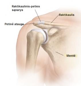 atsiliepimai apie artrozės peties sąnario gydymo andrienko receptas gydymas sąnarių atsiliepimus