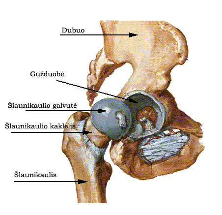 jei visi kaulai ir sąnariai yra skausminga gydymas sąnarių apie organų