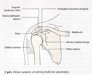 kaip pašalinti skausmą peties sąnario artrozės kas yra liga kai sąnariai serga