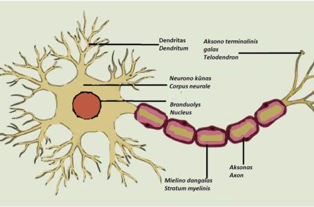 artrozė sąnarių ant delno