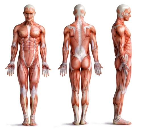 artrozė rankų gydymas liaudies gynimo topinambai ir gydymas sąnarių