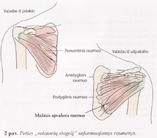 pagalvės sąnarių ligos kaip atliekamas peties magnetinis rezonansas