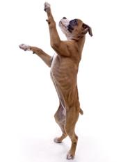 suns sanariu uzdegimas