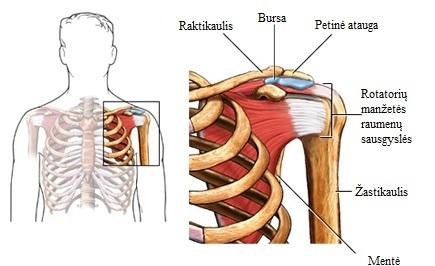 ichtiol tepalu sąnarių gydymo skausmas sąnariuose ir raumenyse rankas nuo peties iki alkūnės